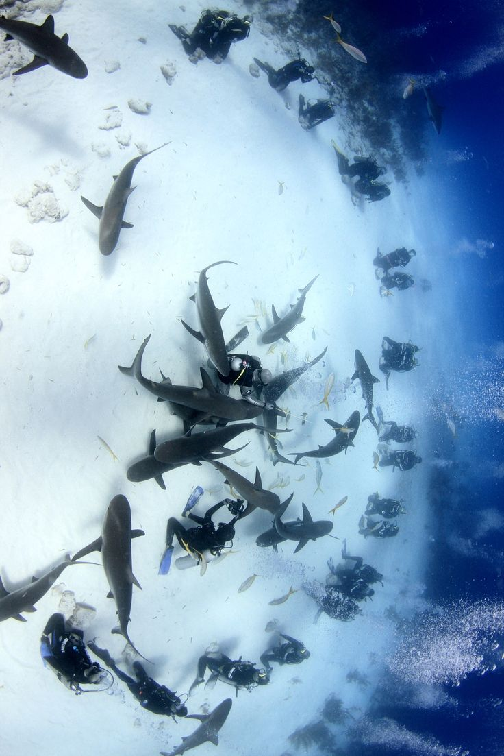 Can't wait to be able to do a shark dive