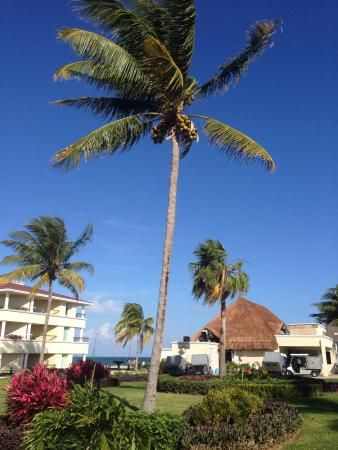 Moon Palace Golf & Spa Resort (Cancun, Mexico) - Resort (All-Inclusive) Reviews - TripAdvisor