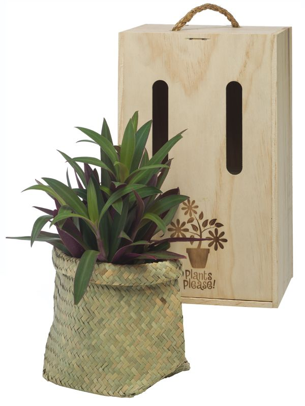 Rhoeo in flax kete by Plants Please! beautifully boxed and delivered within NZ.