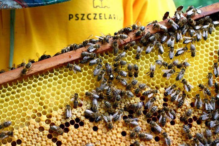 Pszczelarium #wzory_targi