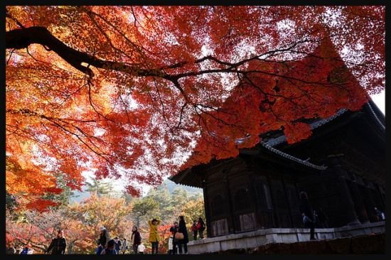 Nanzenji Kyoto at fall. It was one of the most beautiful scenes in Japan!