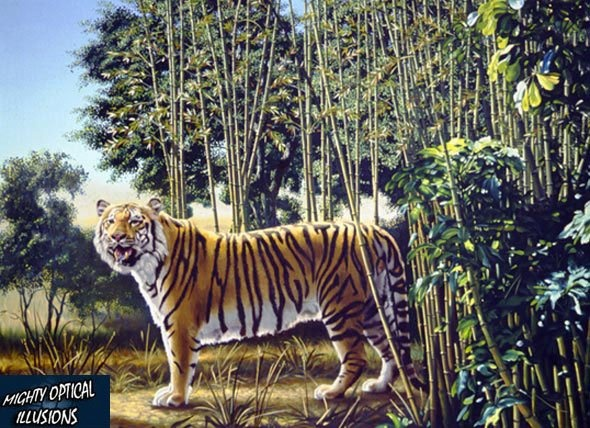 One tiger is easy to see, but there's a hidden tiger too.