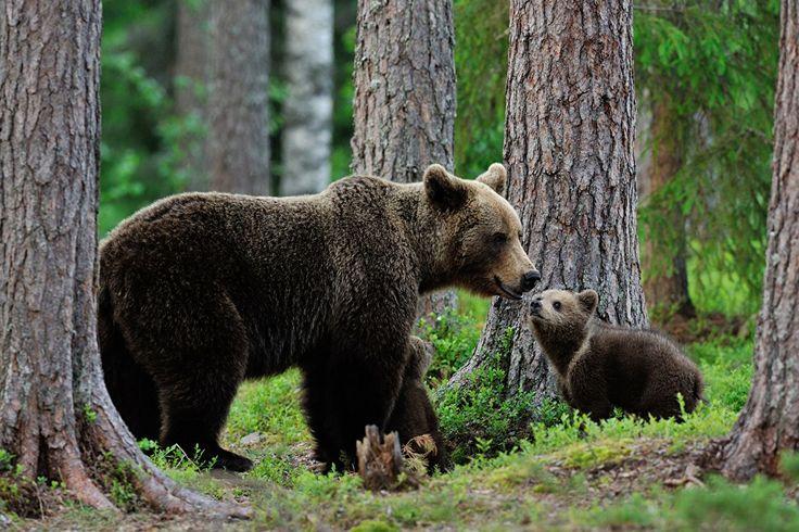 Top 30 Photos of bears