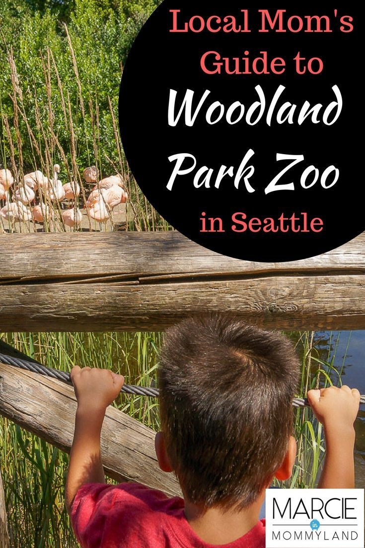 Searching for a kid-friendly outing in Seattle, WA? The Woodland Park Zoo is the perfect day trip for families with babies, toddlers or preschoolers. Find out my tips and insider tricks for enjoying a day at the zoo with your baby, toddler or kids of any age. See why Woodland Park Zoo is a must-see attraction for a family trip to Seattle, WA. Click to read more or pin to save for later. www.marcieinmommyland.com #seattle #woodlandparkzoo #familytravel