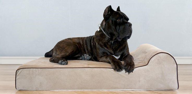 Premium Orthopedic Big Dog Beds
