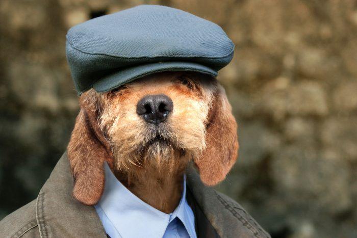 cuidados com o cachorro idoso