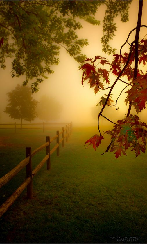 A foggy morning at the park in Albany, New York • photo: Paul Jolicoeur on 500px.