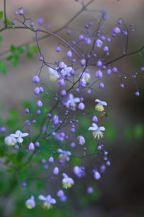 Ein Schattenbeet gestalten – Wildes Gartenherz zeigt wie einfach das ist