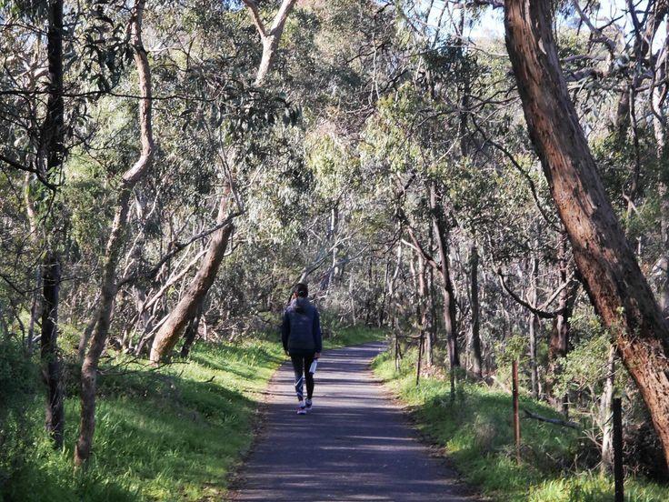 Yarra Boulevard, Melbourne