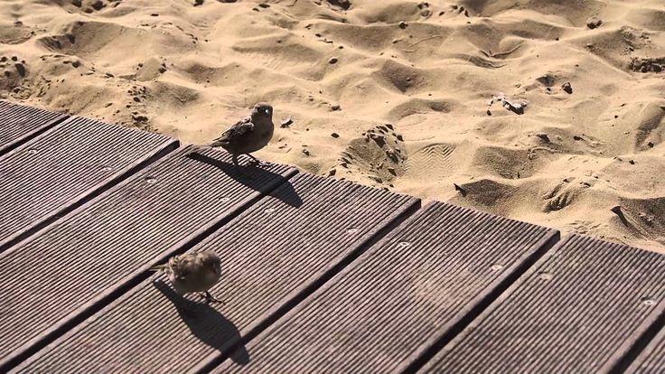 Passerotti in spiaggia
