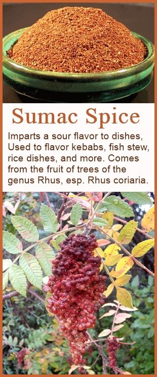 Sumac spice, a sour spice used in the Middle East and other parts of the world. Not to be confused with poison sumac, which has white berries. http://www.culinarylore.com/spices:what-is-sumac-spice