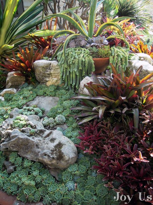 250 best images about gardens with succulents on pinterest for Garden design using succulents