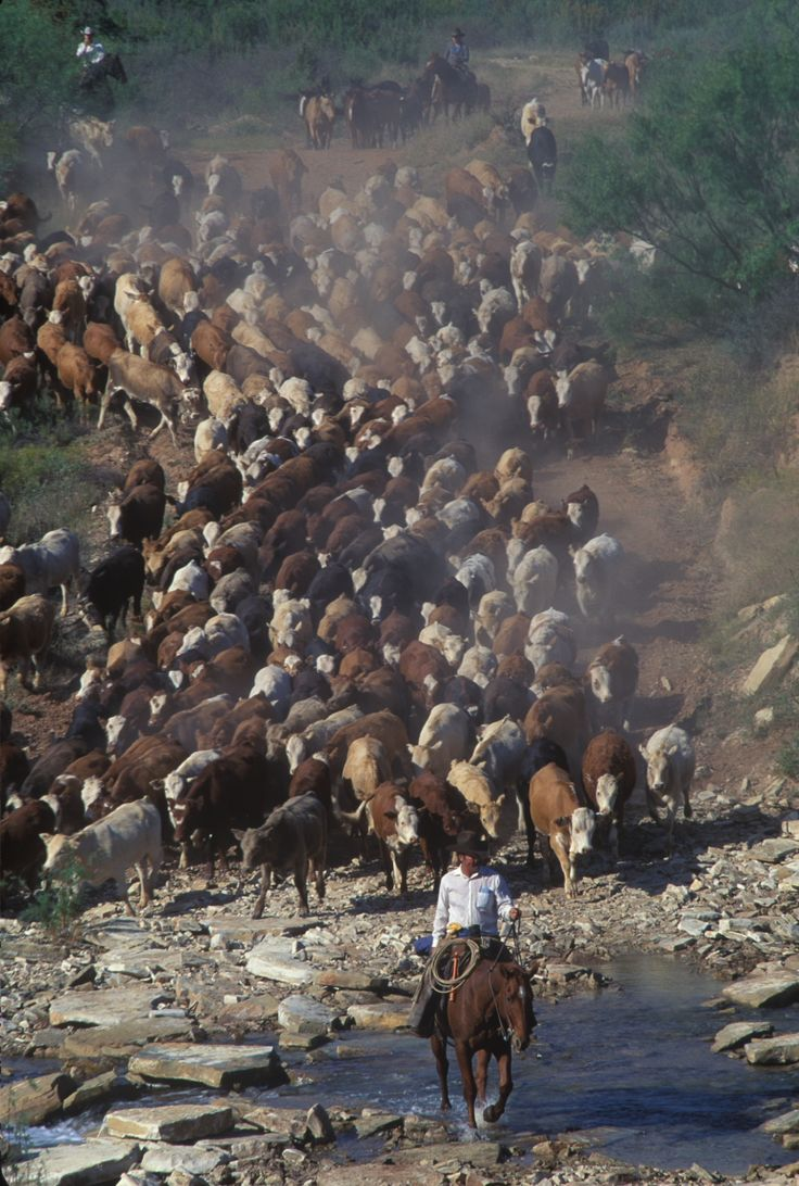 Bring emto water morhouse ranch by wyman meinzer cattle