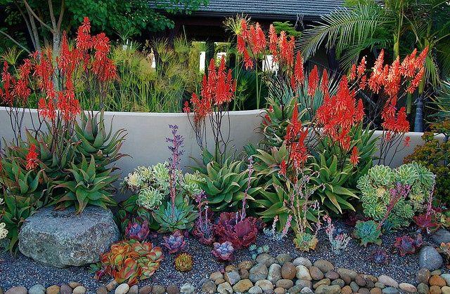 16 best images about xeriscape on pinterest ophiopogon for Succulents that do well in shade