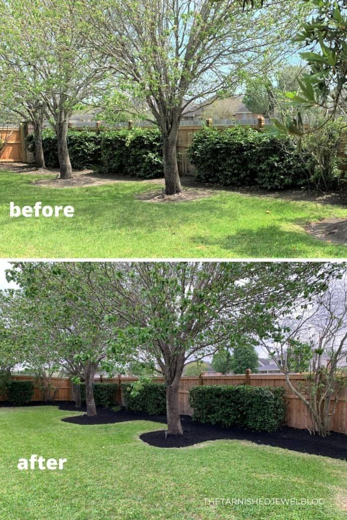 Trimming Hedges Shrubs Yard Work 101 Trimming Hedges Backyard Makeover Hedges