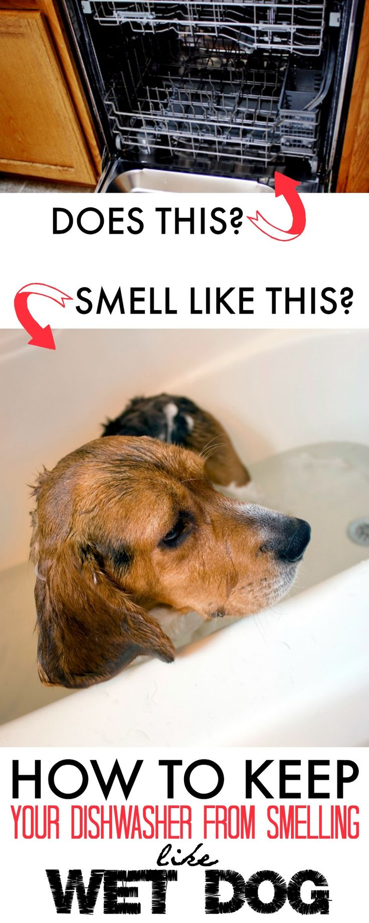 Why Does My House Smell Like A Wet Dog