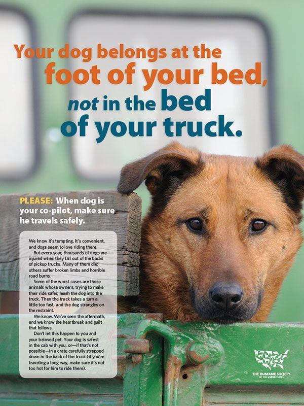 Shareworthy Formerly Mouthpieces Animal Sheltering Online By The Humane Society Of The United States