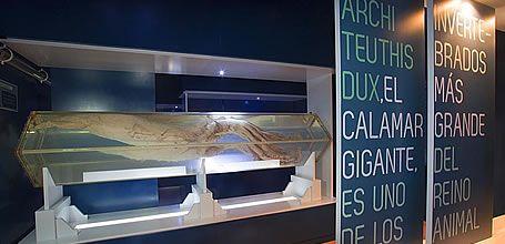 Centro del Calamar Gigante - CEPESMA - Luarca - Valdés - Asturias