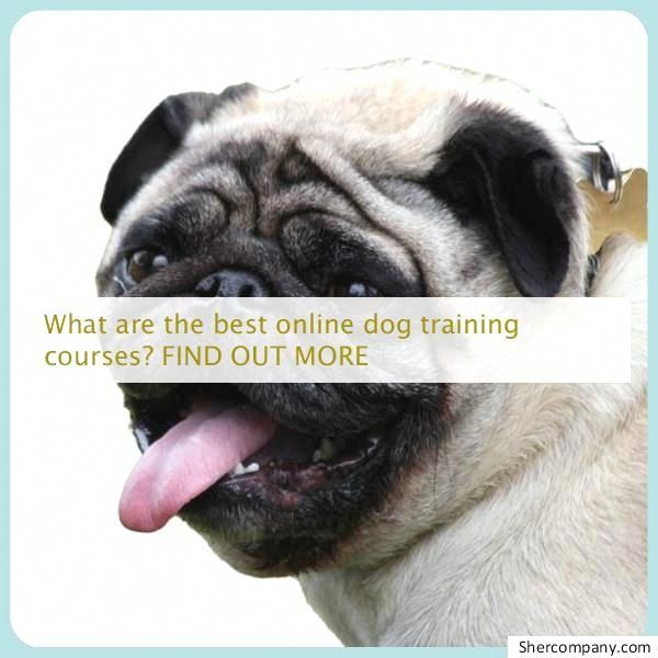 Get Free Strategies And Hacks For Dog Training For Obedience A