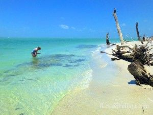 25 Best Sanibel Florida Ideas On Pinterest Sanibel