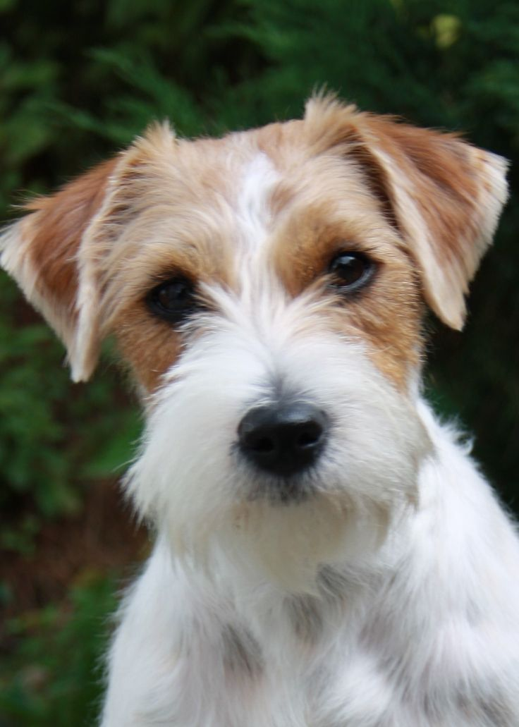 Best Dog Food For Terrier Mix