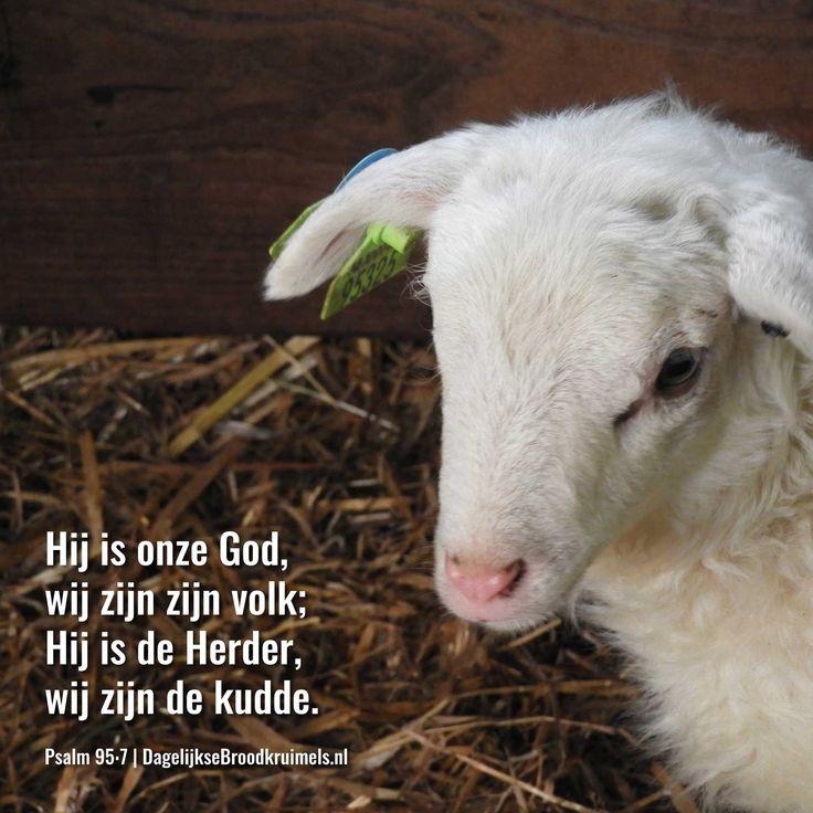 Hij is onze God, wij zijn zijn volk; Hij is onze Herder, wij zijn de kudde. Psalm 95:7  #Herder  https://www.dagelijksebroodkruimels.nl/psalm-95-7/