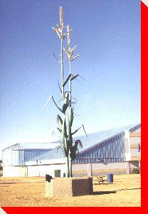Cornstalks - Taber, Alberta  ... oh that wonderful sweet Taber corn