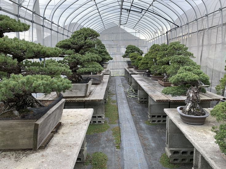 33333jpg bonsai greenery outdoor decor