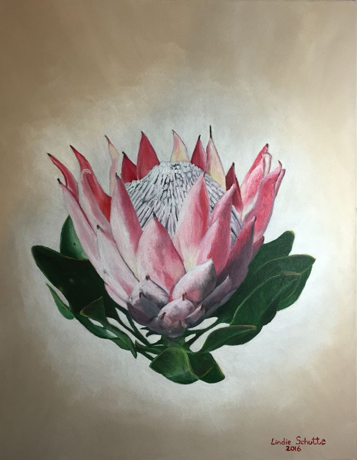 Protea Cynaroides (King Protea) #2 Oil on canvas