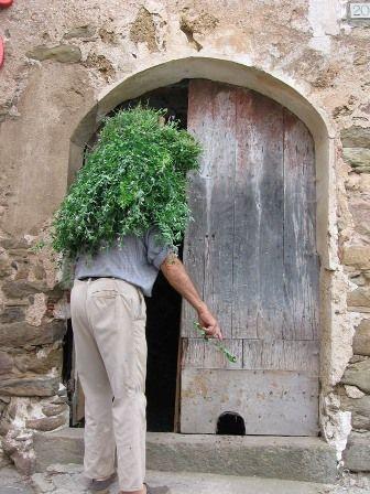 Esta bella imagen de Ridaura nos muestra un campesino con su haz de alfalfa, frente a su puerta con gatera.
