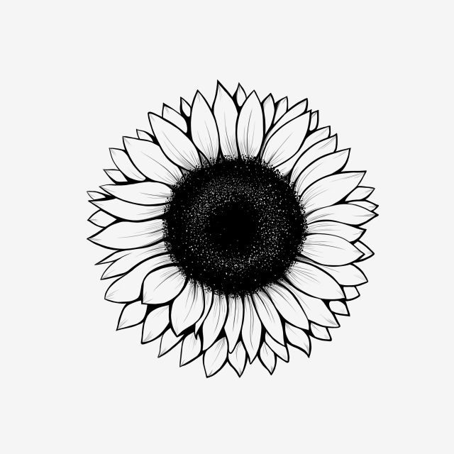 30++ Sunflower clipart black and white png ideas