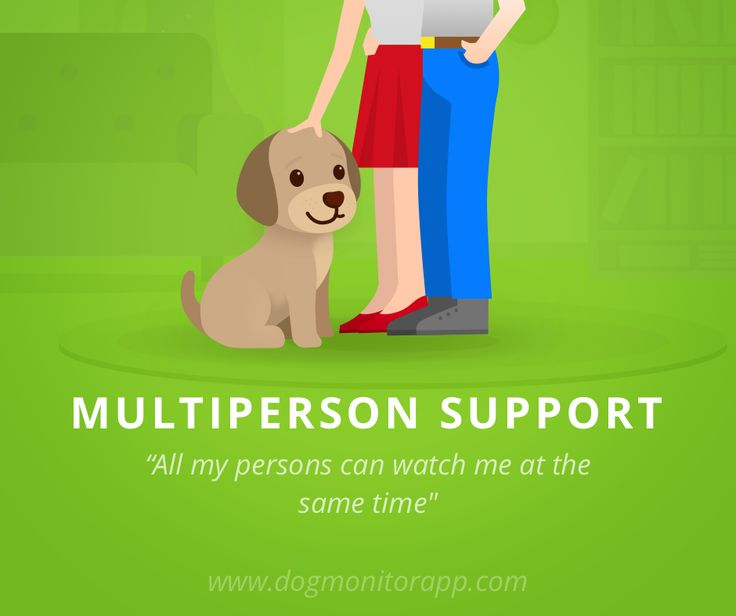 Both of you can be watching your dog at the same time!