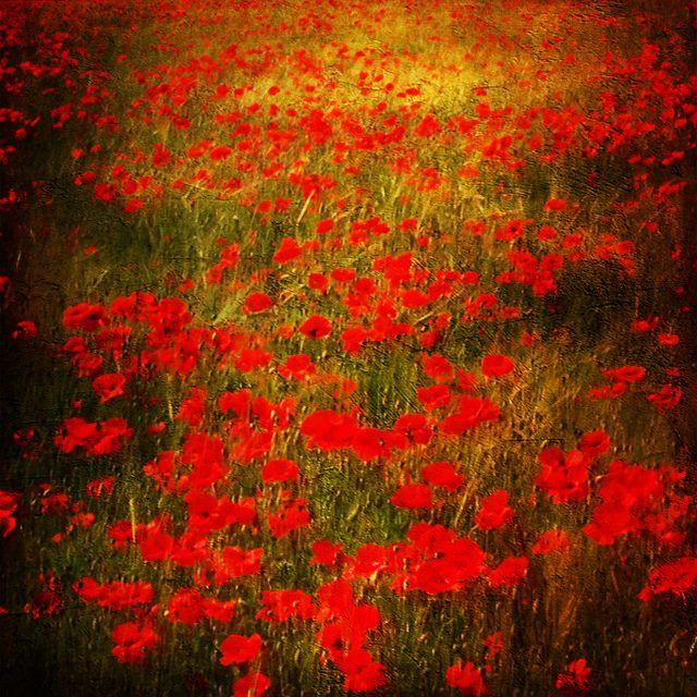 art field red - photo #47