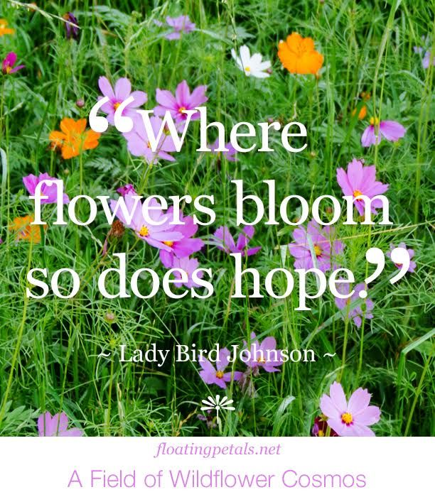 149 best images about monday's flower quote on Pinterest