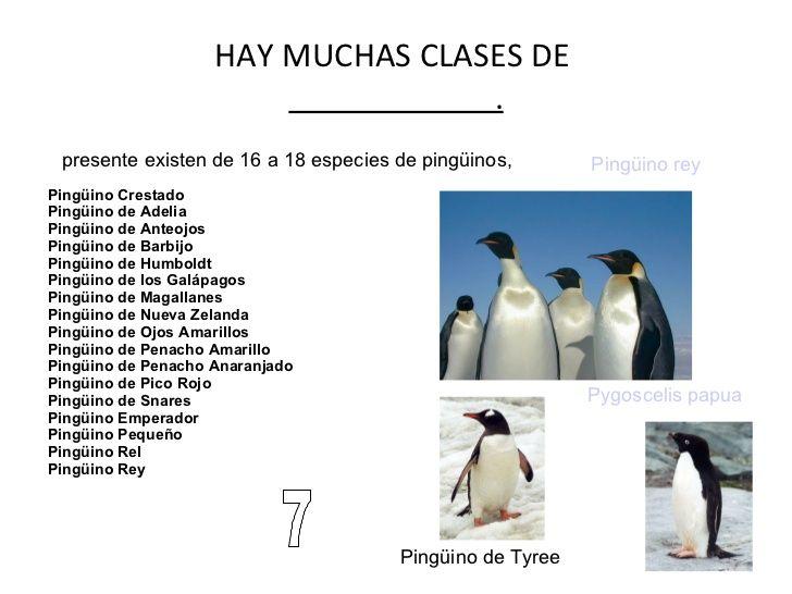 imáges de los diferentes tipos de pinguinos que existen - Yahoo Search Results Yahoo Image Search Results
