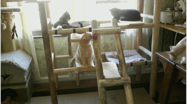Screened In Balcony For Cats