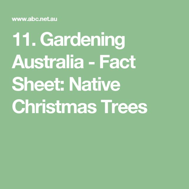 11. Native Christmas Trees