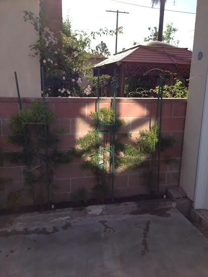 Helping another garden grow with redirected sunlight