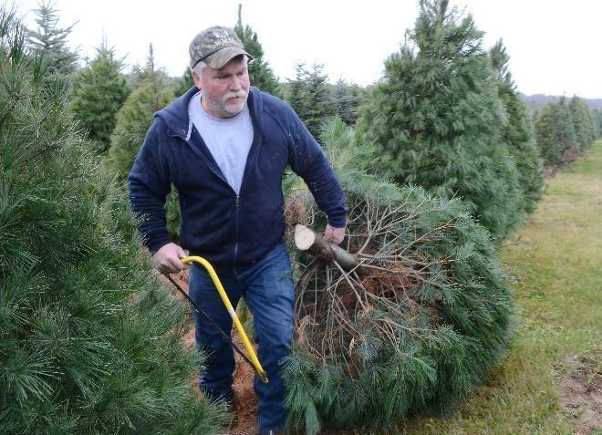 Side Job Became A Career For Christmas Tree Grower Christmas Tree Farm Tree Farms Christmas Tree Decorations Diy