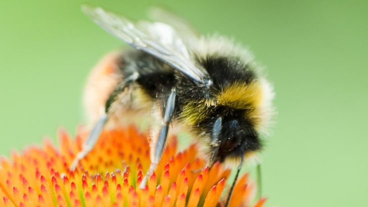 In de berm van het stuk A4 in aanbouw tussen Delft en Schiedam zijn zaterdag bloemen gezaaid.Het gaat om speciaal geselecteerde soorten die voedsel voor bijen leveren zoals nectar en stuifmeel.