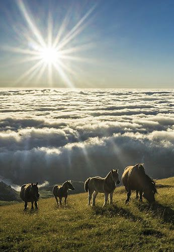so beautiful landscape - horse clouds sun.....