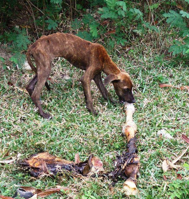 Isa: | 25 fotos inspiradoras de cães antes e depois de seu resgate