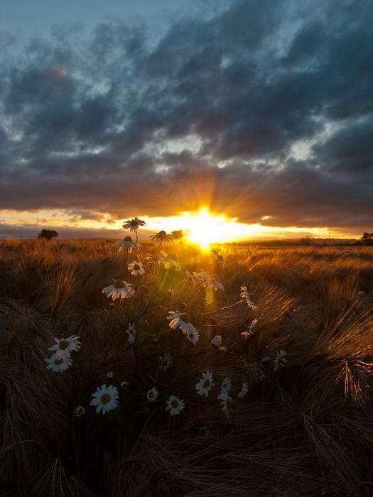 """Лугнасад – праздник первого урожая :: Старинные праздники :: Блог """"Любовь моя – Шотландия"""""""