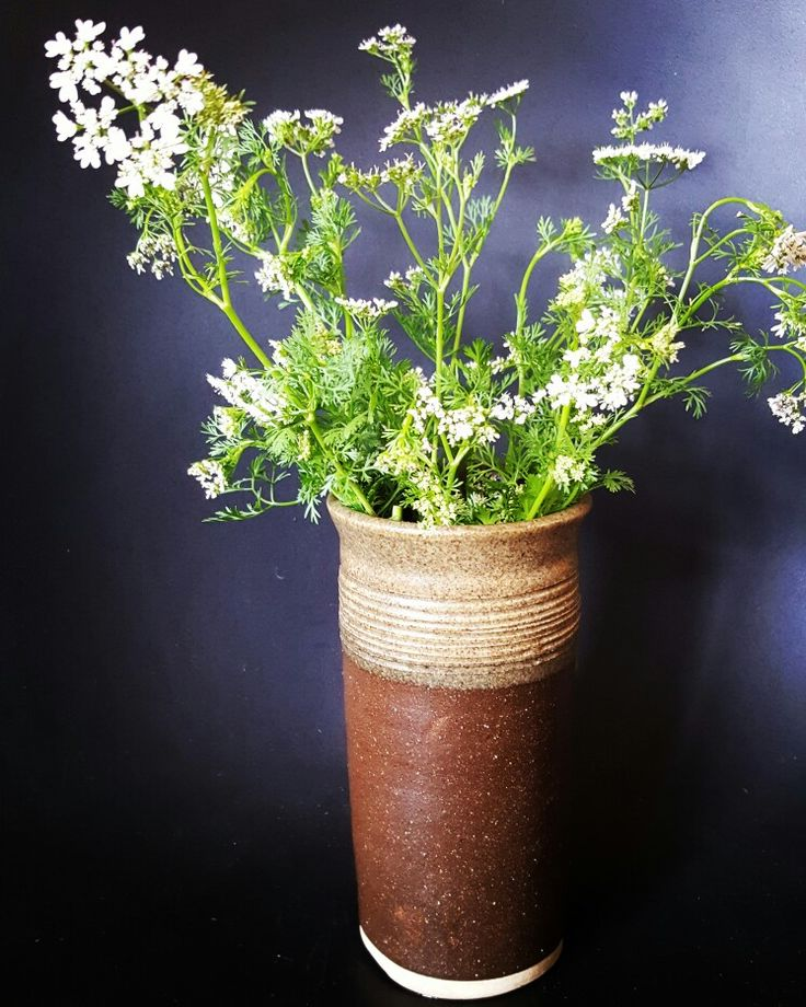 Weekly posy  - coriander flowers