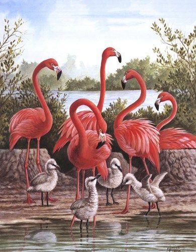 Flamingo 1, Art Print by Ron Jenkins: Pink Flamingos, Posters Prints, Art Prints, Fabulous Flamingos, Crosses Stitches, Flamingos Birds, Flamingos Art, Birds Crosses, Ron Jenkins