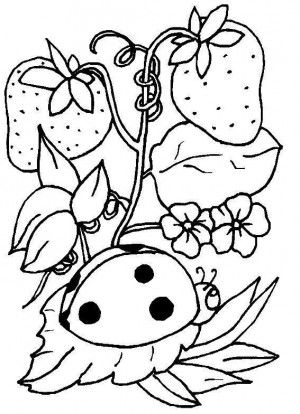 Ladybugs Coloring Book 15