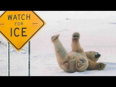 Funny Animals Slipping on Ice Compilation 2015 - Funny Plox -