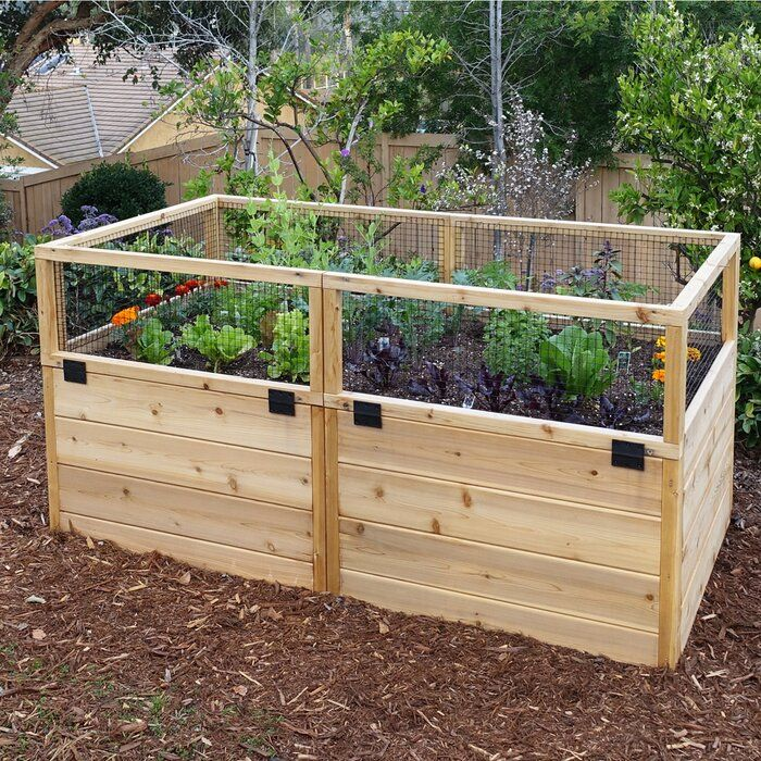 6 Ft X 3 Ft Cedar Raised Garden Bed In 2020 Cedar Raised Garden Cedar Raised Garden Beds Vegetable Garden Raised Beds