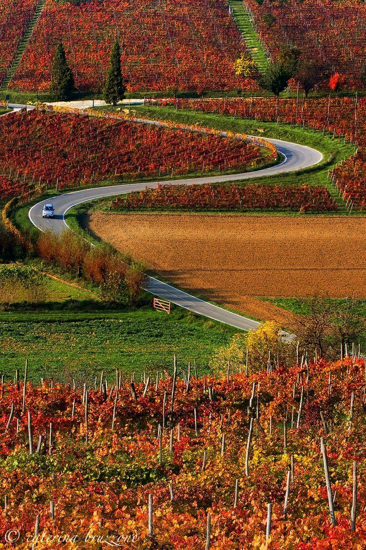 Autumn in Monferrato, Piemonte, Italy