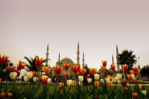 Blue Mosque and tulips